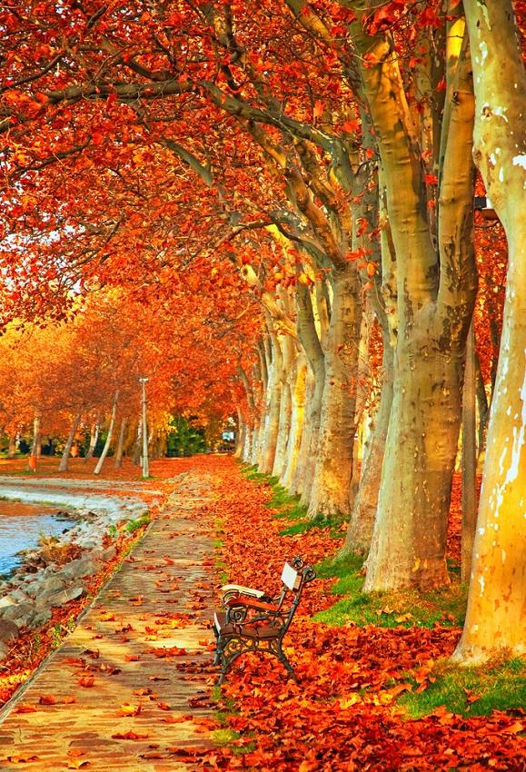 Toamna magica: 14 imagini de poveste care ne indeamna sa iesim din casa si sa colindam parcurile oraselor: Copacii cu frunze curgatoare