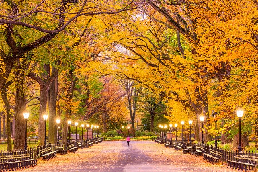 Toamna magica: 14 imagini de poveste care ne indeamna sa iesim din casa si sa colindam parcurile oraselor: Toamna in New York (Central Park)