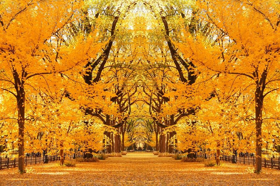 Toamna magica: 14 imagini de poveste care ne indeamna sa iesim din casa si sa colindam parcurile oraselor: Aur in vazduh si pe pamant