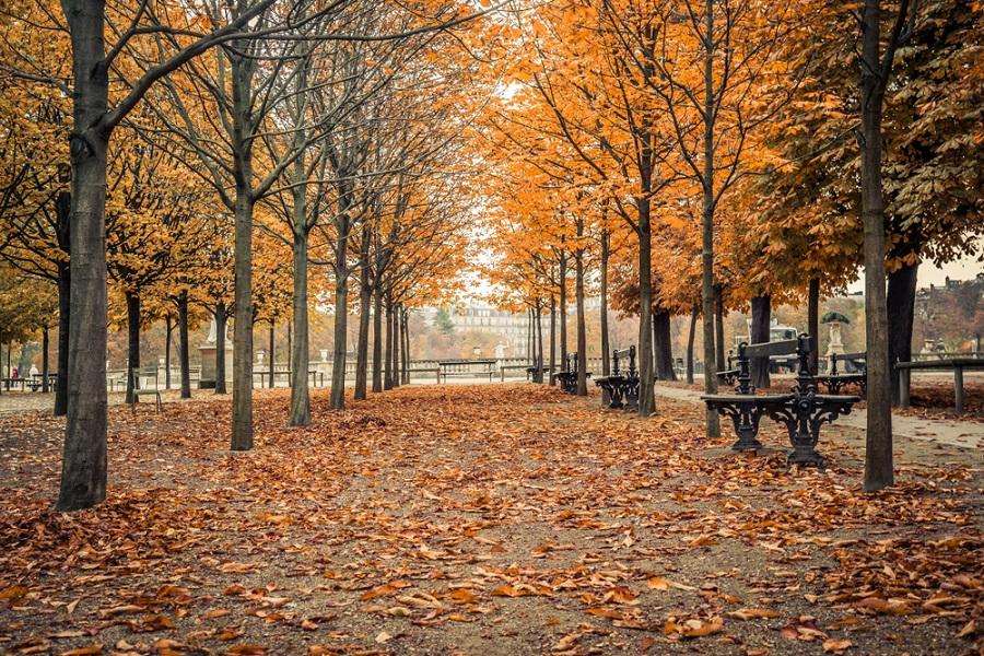 Toamna magica: 14 imagini de poveste care ne indeamna sa iesim din casa si sa colindam parcurile oraselor: Toamna in Gradinile Luxemburg din Paris