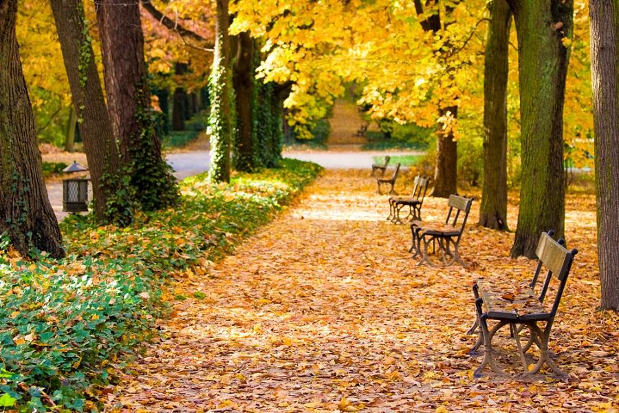 Toamna magica: 14 imagini de poveste care ne indeamna sa iesim din casa si sa colindam parcurile oraselor: Poezie pe aleile parcului Lazienki din Varsovia