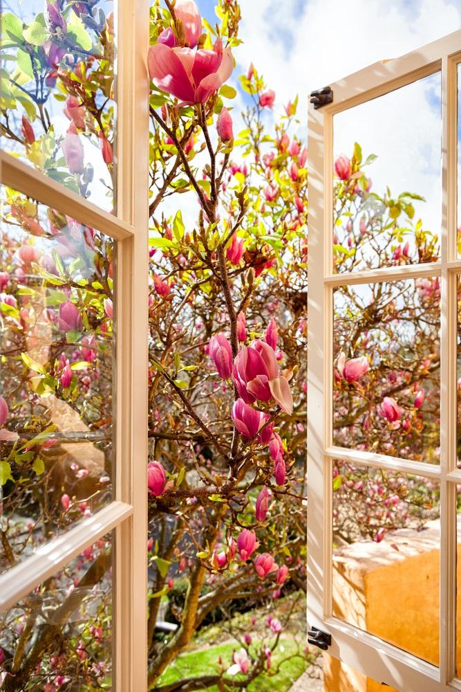 Raiul cu magnolii - Balsam pentru sufletele incercate: 21 de imagini cu magnolii in floare: Fereastra deschisa catre vise si visari