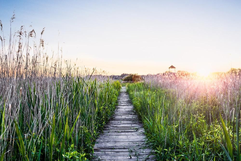 Vara -cel de-al treilea Rai al anului: 19 Imagini mirifice cu vara fermecata: Apus de vara printre fire de iarba inalte: cararea catre fericire