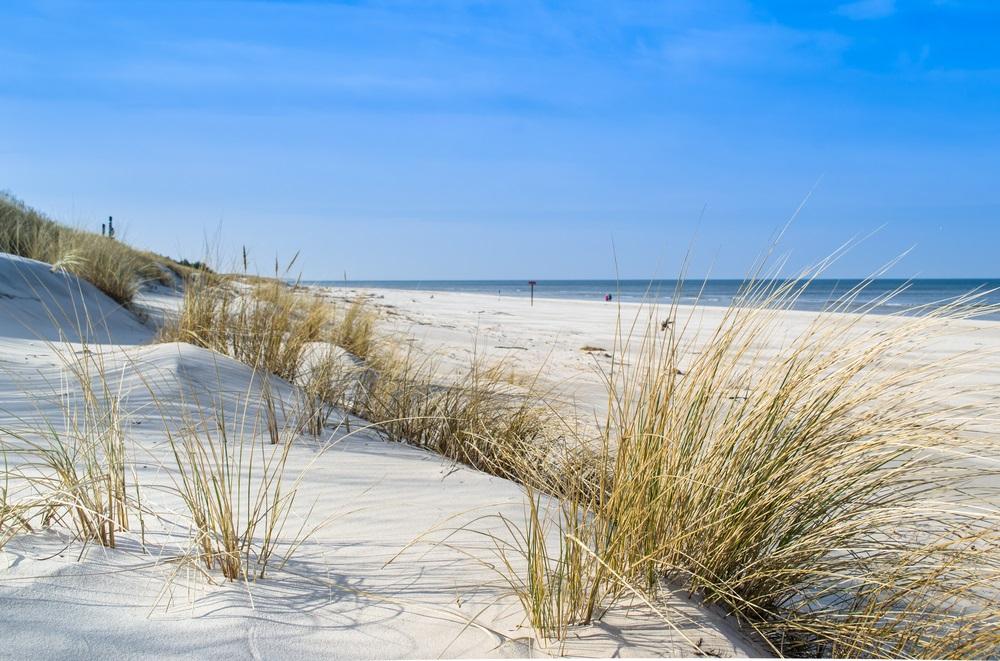 Vara -cel de-al treilea Rai al anului: 19 Imagini mirifice cu vara fermecata: Iarba de mare leganata de briza marii pe o plaja alburie din Polonia (Marea Baltica)