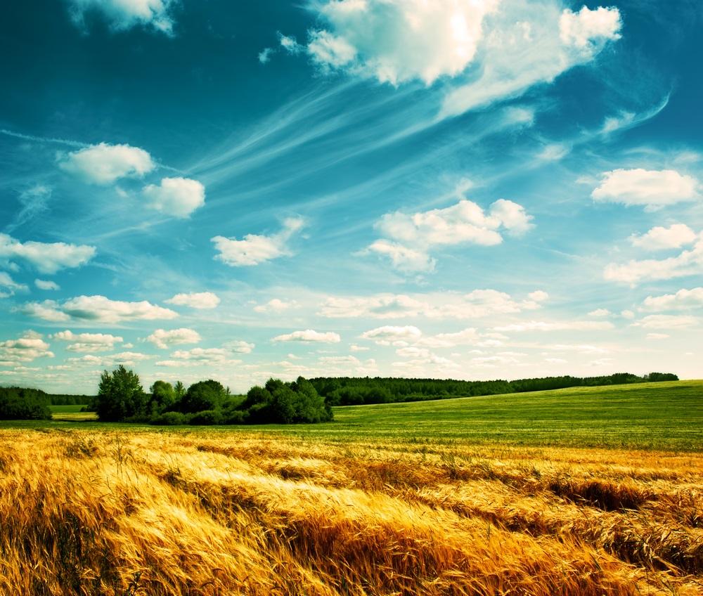 Vara -cel de-al treilea Rai al anului: 19 Imagini mirifice cu vara fermecata: Zenul pe pamant: camp nesfarsit de grau sub un cer de un albastru clar, de vara, pictat cu nori pufosi si albi
