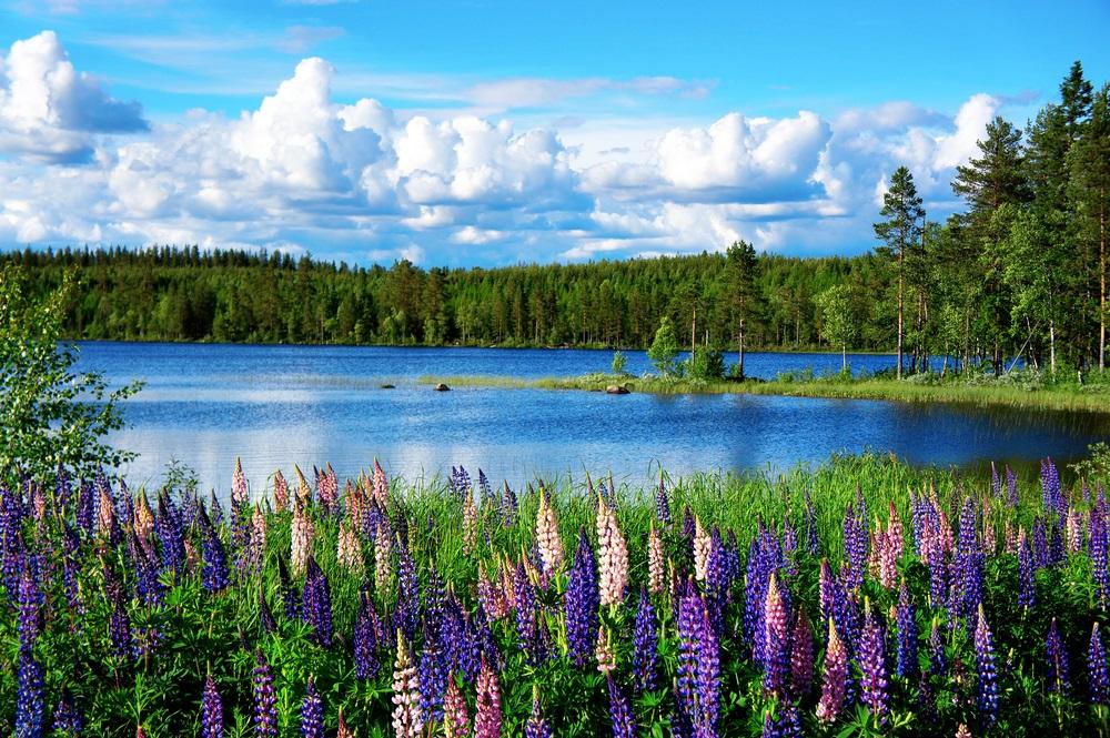 Vara -cel de-al treilea Rai al anului: 19 Imagini mirifice cu vara fermecata: Peisaj de vara scandinav cu lupin minunat si un lac ca cerul