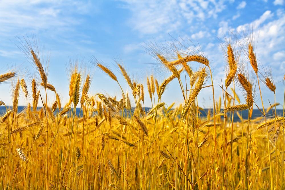 Vara -cel de-al treilea Rai al anului: 19 Imagini mirifice cu vara fermecata: De veghe in lanul de secara