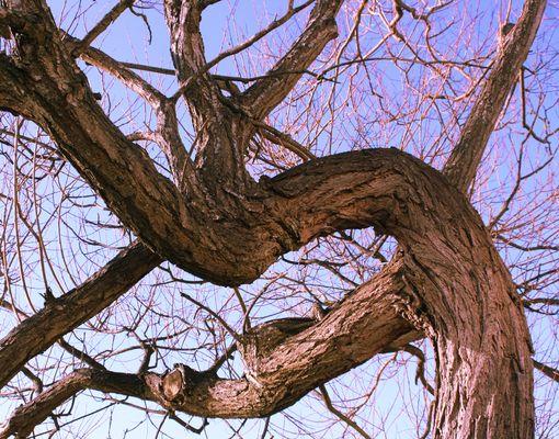 Top 5 analgezice naturale: Extractul de scoarta de salcie alba (Salix alba)