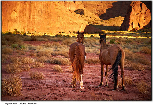 20 de imagini cu cai: Cai la apus de soare